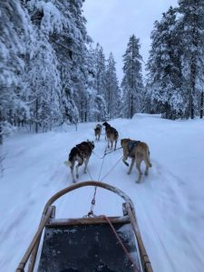 View from the sled with husky dogs pulling the sled