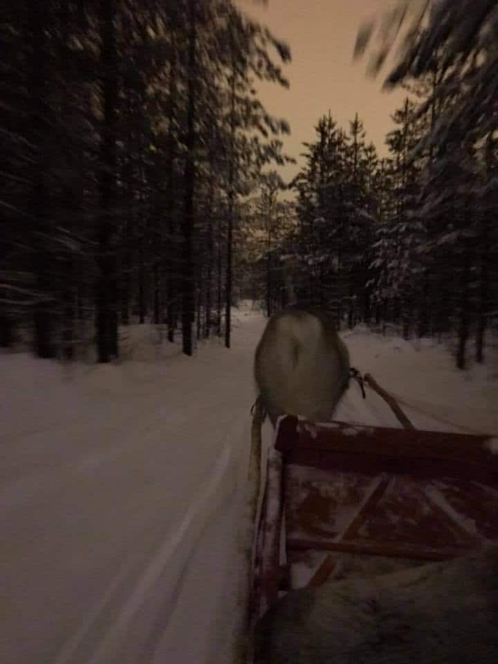 Evening ride on a sleigh pulled by a reindeer
