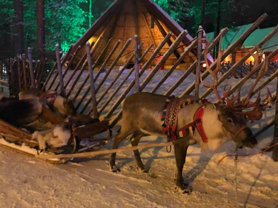 A reindeer attached to a sleigh full of blankets