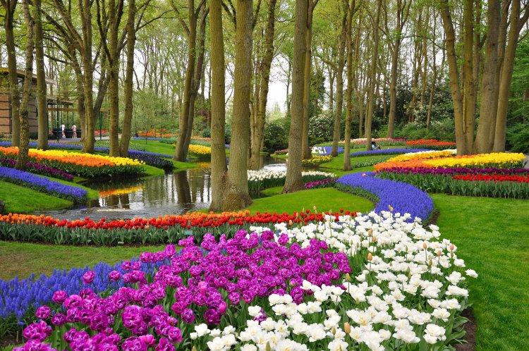 Keukenhof Holland Tulip Gardens in the Netherlands.