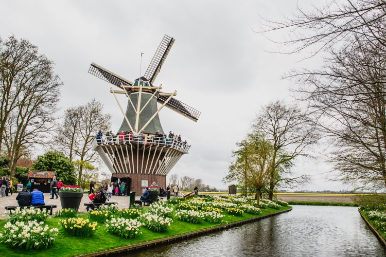 Windmill at Keukenhof and boat tours through the tulip fields.