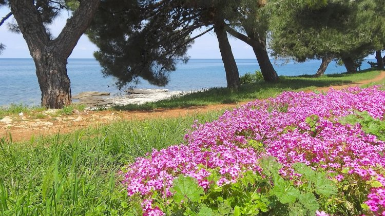 Spring is a great time to visit Croatia with all the flowers in bloom and comfortable temperatures with fewer crowds. Find out this and more in my Croatia Guide to Visiting.