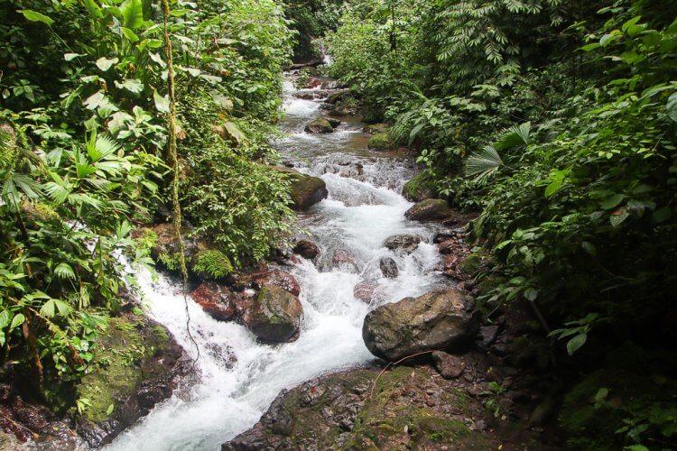 Beautiful river running through rainmaker park in Costa Rica.