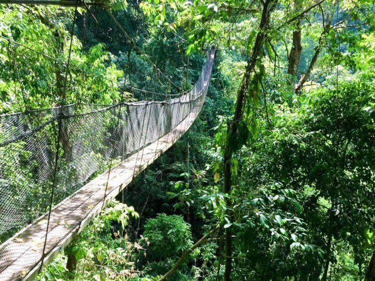 Rainmaker Aerial Walkway in Costa Rica