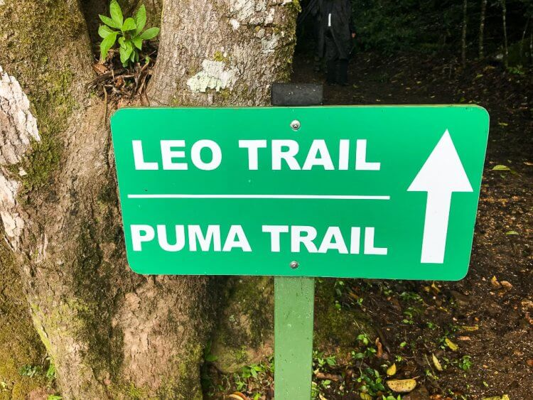 Curi Cancha Reserve Trail showing the Leo Trail and the Puma Trail with an arrow.