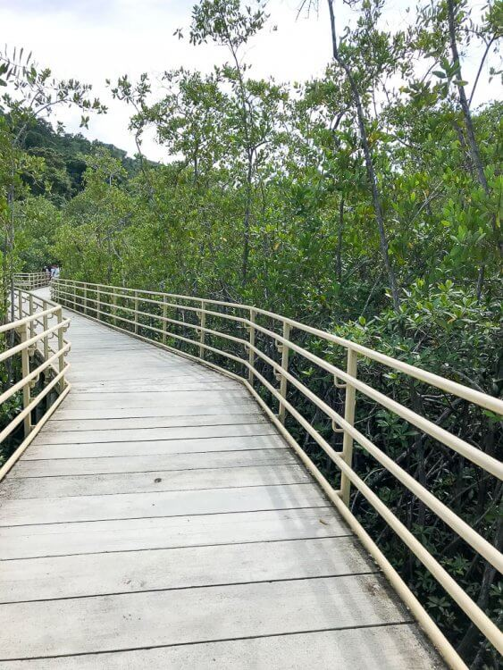 Manuel Antonio park Costa Rica features mangrove trails that are handicapped accessible.