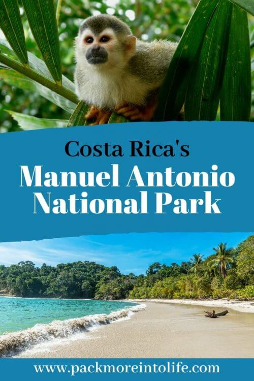 Complete 2020 visitor's guide to Manuel Antonio, Costa Rica. One of the most beautiful places and most popular tourist destinations in Costa Rica. Manuel Antonio National Park in Costa Rica is the most popular national park in the country. Find out how to plan the best visit here including how to avoid common parking and ticket scams, the benefits of hiring a naturist guide as well as what to expect inside Parque Nacional Manuel Antonio. #CostaRica #ManuelAntonio #travelwithkids #travel #EcoTourism #CentralAmerica