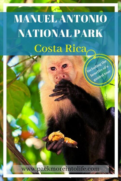 A Full Guide to visiting Manuel Antonio National Park, Costa Rica. Tips on how to plan a trip to Costa Rica's Manuel Antonio, including avoiding scams and why you should hire a guide to tour Parque Nacional Manuel Antonio. View the abundant wildlife including monkeys, sloths, toucans and more. Enjoy one of the most beautiful beaches in Manuel Antonio and enjoy some delicious food. What to do in Manuel Antonio | Costa Rica itinerary ideas | Best Things to do in Costa Rica | #costarica #manuelantonio #travelwithkids #ecotourism #nationalparks