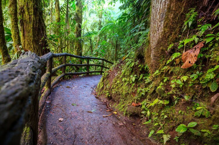 Paved trail with handrails meandering through the forest at Mistico Hanging Bridges Park near Arenal, Costa Rica.