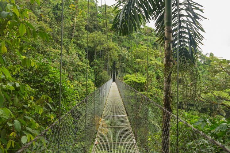 View across a hanging bridge over the tree tops at the Mistico Hanging Bridges Park. It is a highlight and one of the recommended top things to do in la fortuna costa rica.
