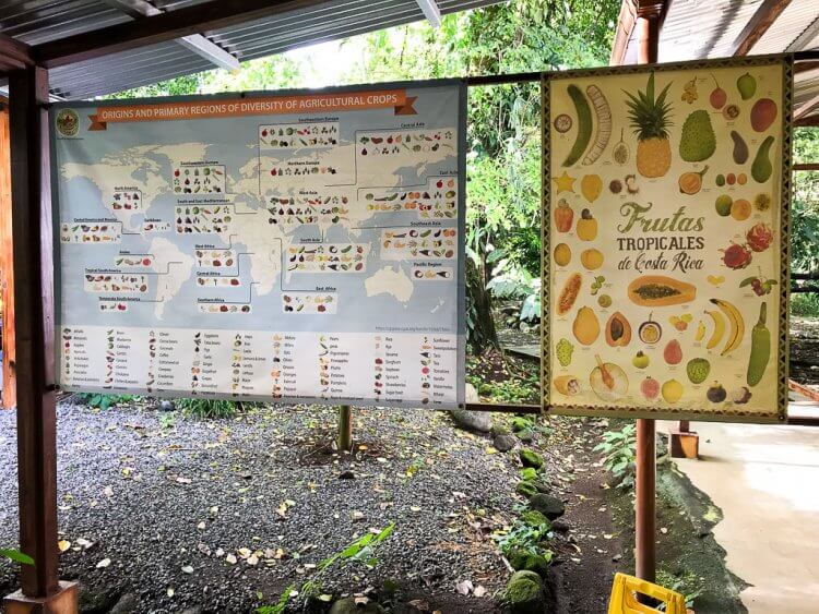 Map showing the history of the cocoa seeds.