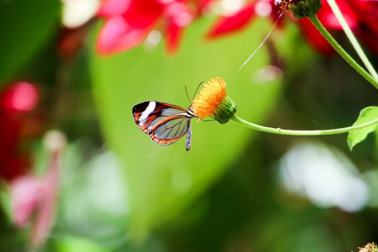 Beautiful stain glass butterfly sitting on a flower.