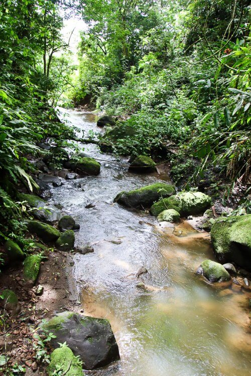Stream running through the forest from the hidden waterfall at Viento Fresco.