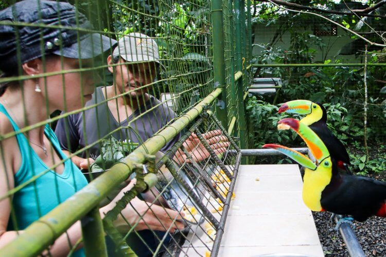 Guests on the outside of a cage helping to feed the toucans located inside the cage of the animal sanctuary.