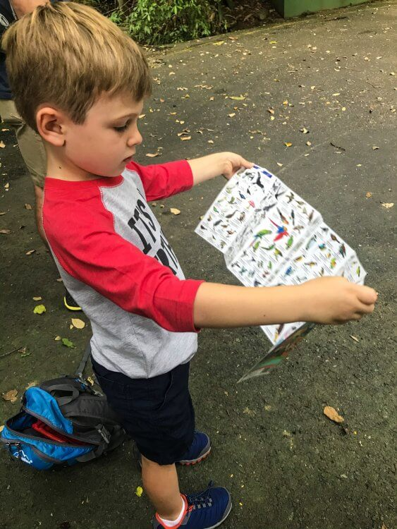 Little boy wearing a grey and red shirt and blue shorts holding a wildlife guide in Costa Rica.