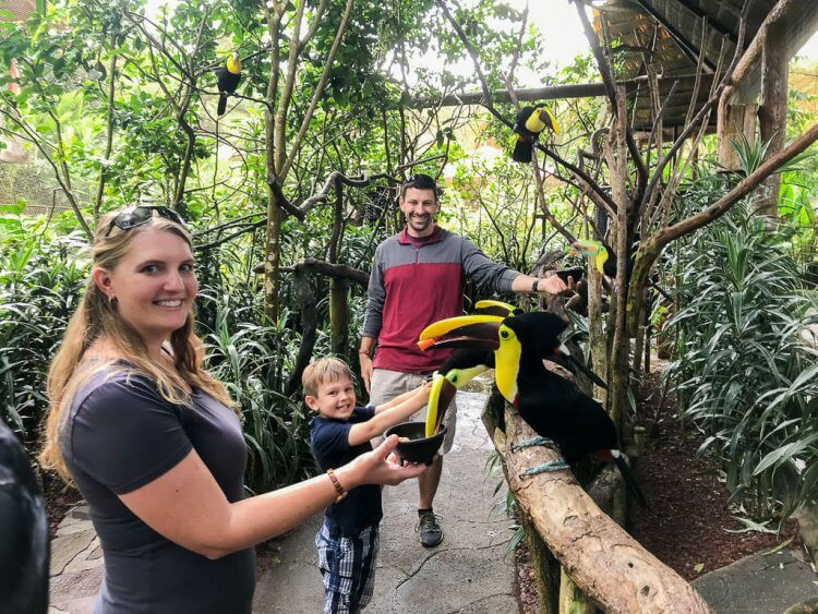 Family of three holding containers of fresh fruit for toucans. There are multiple toucans sitting on the branches in an enclosure at the Peace Lodge in Costa Rica.