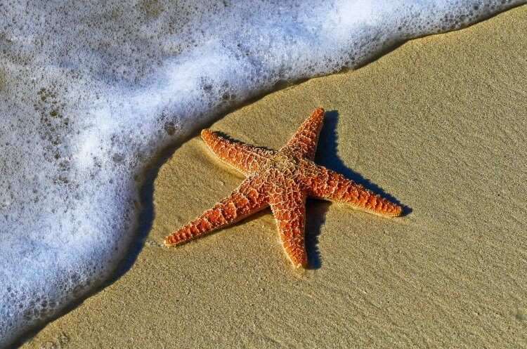 Starfish lying on the beach with the waves crashing onto the sand.