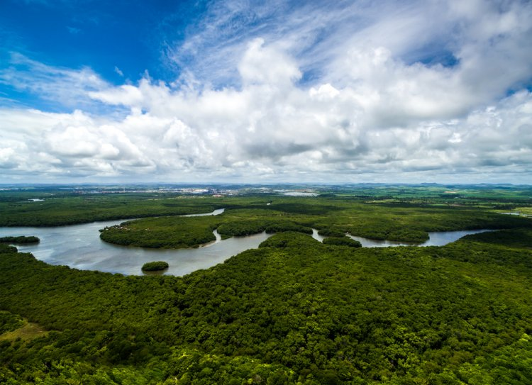 Amazon Rainforest in Brazil with the Amazon river flowing in the middle.