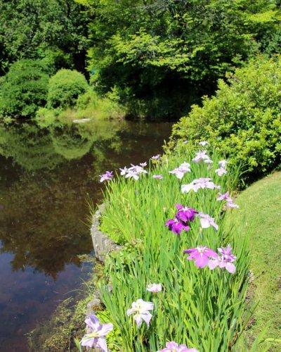 Flowers along the pond in Thuya Garden near Bar Harbor Maine